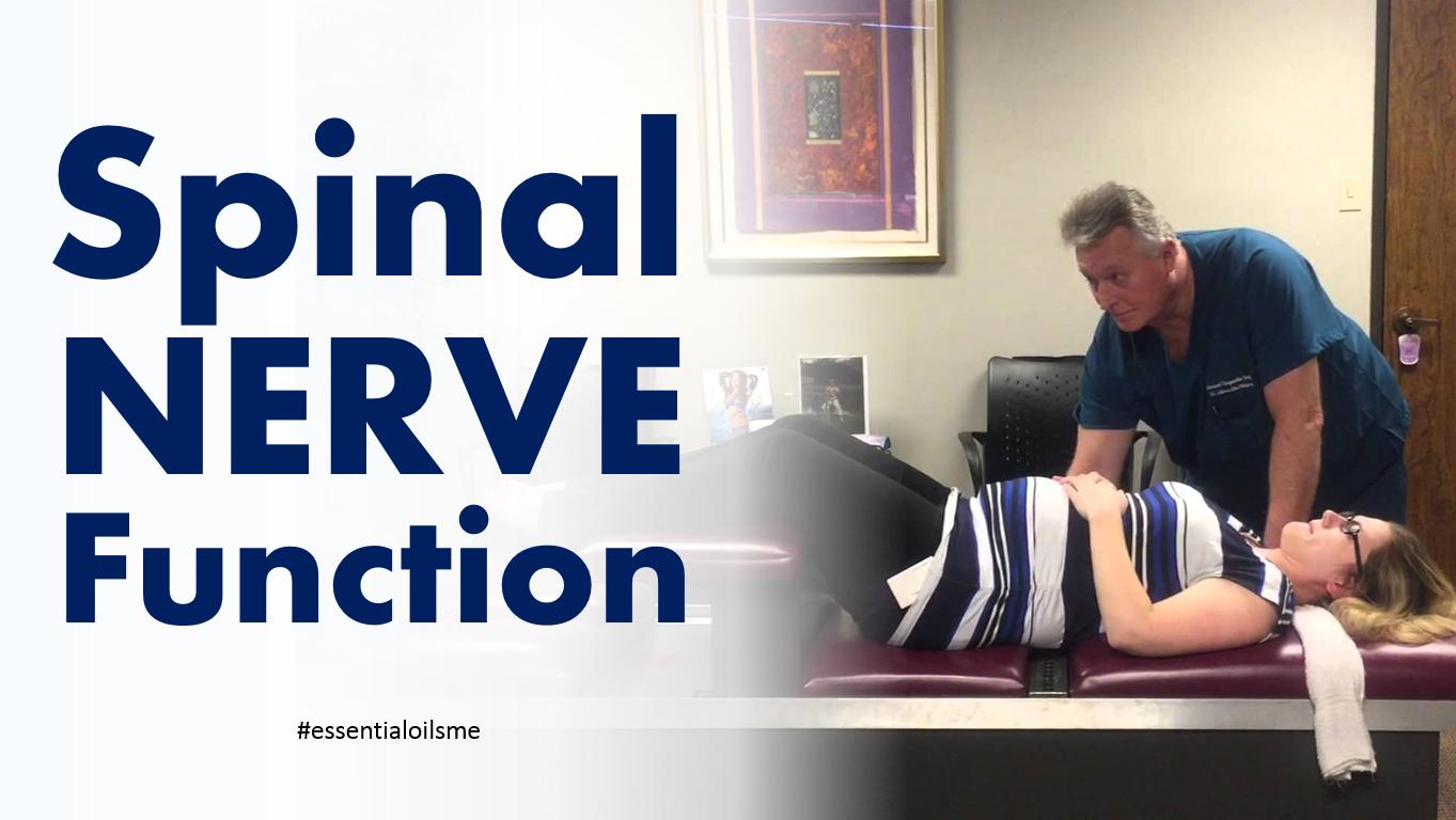 spinal-nerve-function