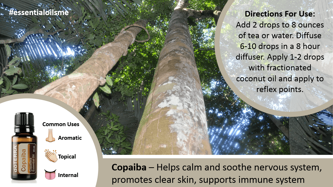 Appealing Doterra Copaiba Essential Oil Benefits